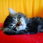 猫の嘔吐は生理現象!しかしその嘔吐が病気のサインかも!