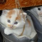 猫の去勢や避妊はすべきなのか!?メリットとデメリットを知ろう!