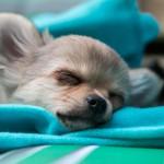 犬が嘔吐した時の注意点。様々な観点から犬の体調を判断しよう!