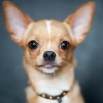 犬の涙やけの7つの原因とは?可愛い顔を守るために対策しよう!