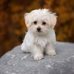 犬の食糞の5つの原因。愛犬の食糞を確認次第すぐ対処しよう!