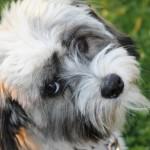 犬のくしゃみについて。5つの原因とその対策について。