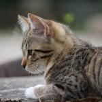 猫の鼻水やくしゃみ。7つの原因を知り、予防しよう!