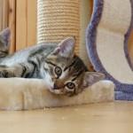 猫を飼いたい方必見!受け入れの準備やその後の飼い方について