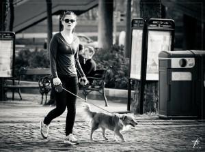 イヌの散歩