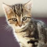 猫の便秘。病気の可能性も?7つの原因と5つの対策を知ろう!