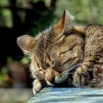 猫エイズとは?正しい知識のもと対策、予防をしよう!