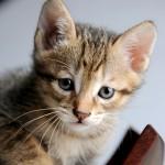 猫がストレスと感じること10選!ストレスは万病の元!?