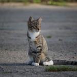 捨て猫を保護するのに必要な知識とは?最初に行うべきこととは?
