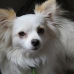 犬のフケが出る5つの原因とは?ヒドい場合は病院に行く必要も?