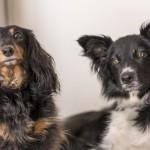 犬に寄生するノミ。ノミは犬にどんな悪影響を及ぼすの!?