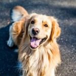 犬に寄生するノミ。徹底した予防と対策が必要不可欠!