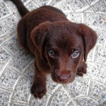 犬に寄生するダニ。様々なダニにおける対策、予防を徹底しよう!